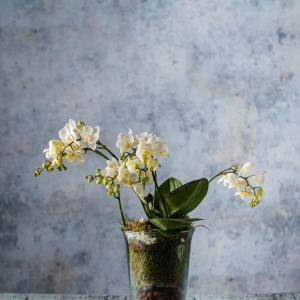order plants and flowers online for delivery in Dublin