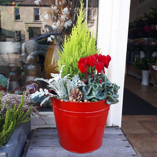 order plants online Frosty Winter Planter