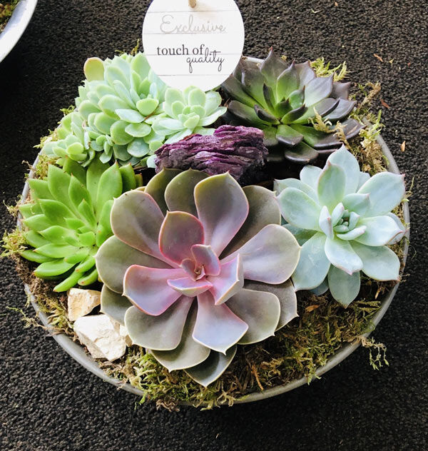 order house plants online in Dublin for delivery