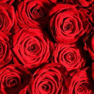 red roses flower delivery Dublin