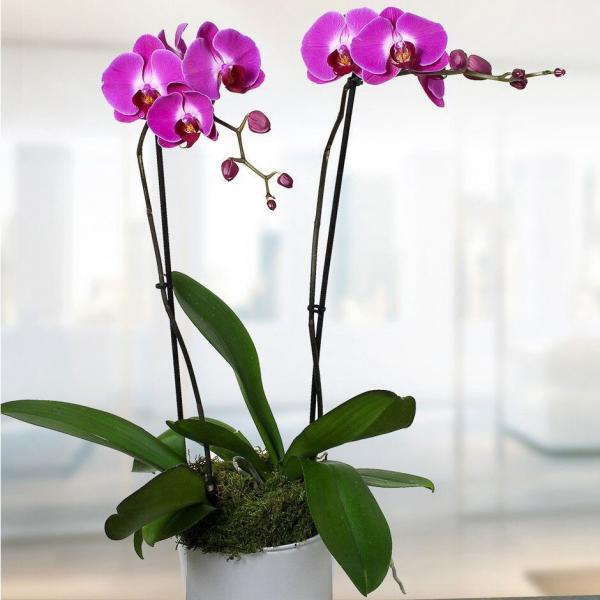 orchid flower delivery Dublin